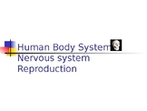 Human Body 4: Nervous, Endocrine & Reproduction systems
