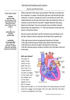 Human Body - Activities