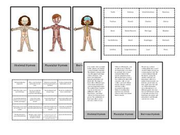Human Body Systems Activity