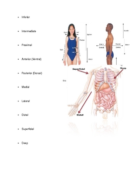 Human Body- An Orientation Student Notes Outline