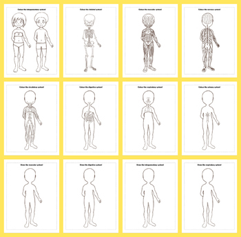 Human Body Anatomy Colouring Pages & Drawing Prompts