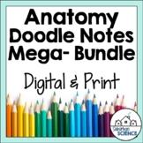 Human Body & Anatomy Doodle Notes Bundle