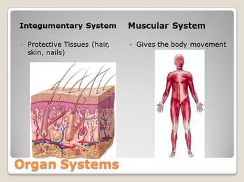 Human Body - Anatomy Unit