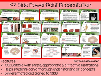 Human Body Anatomy & Function PowerPoint, Notes & Exam (Differentiated/Editable)