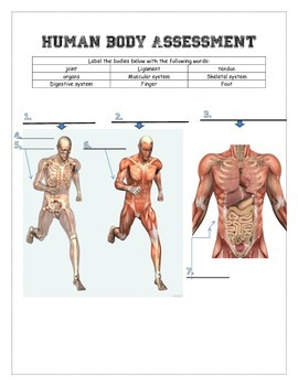 Human Body Assessment