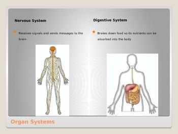 Anatomy - Human Body - Body Organization