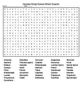 Human Body Bones Crossword and Word Search with KEYS