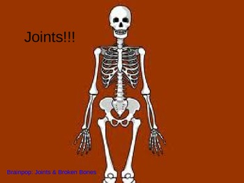 Human Body Bones and Joints
