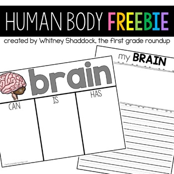 Human Body Brain FREEBIE