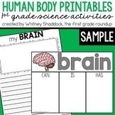 Human Body Brain FREEBIE