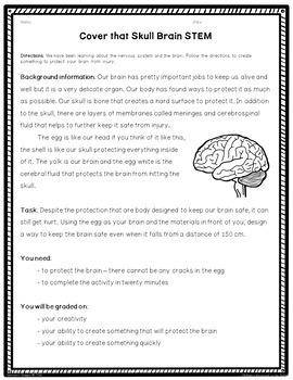 Human Body Brain STEM Activity