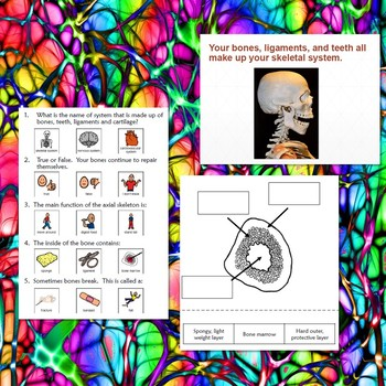 Human Body Bundle 2 for Special Education