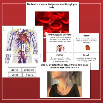 Human Body Bundle for Special Education