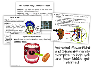 Human Body Systems - PowerPoint & Handouts Bundle
