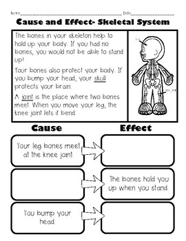 Human Body Cause and Effect