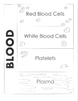 Human Body - Circulatory System - Components of the Blood Foldable