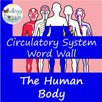Human Body: Circulatory System Word Wall Vocabulary Cards