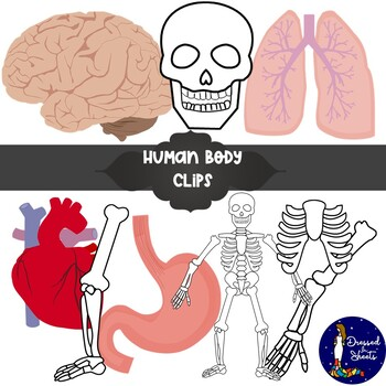 Human Body Clipart