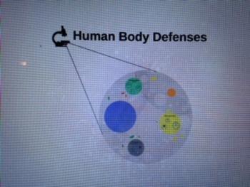 Human Body Defenses