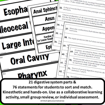 Digestive System Structure & Function Card Sort & Assessment High School Biology