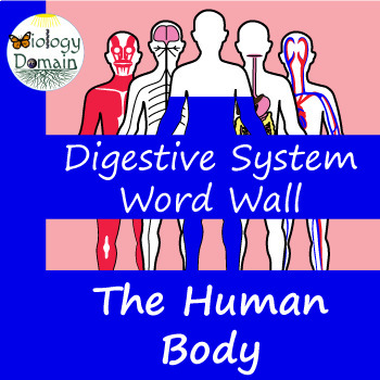 Human Body: Digestive System Word Wall Vocabulary Cards