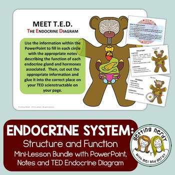 Endocrine system by getting nerdy with mel and gerdy tpt ccuart Choice Image