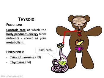 Endocrine system by getting nerdy with mel and gerdy tpt endocrine system ccuart Choice Image