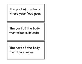 Human Body File Folder
