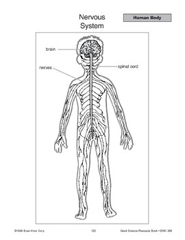 Human Body: Four Systems and Teeth