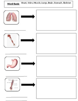 Human Body Functions Quiz
