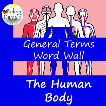 Human Body General Terms Word Wall Vocabulary Cards