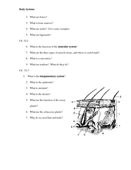 Human Body Guided Reading Questions (Biology Outline)