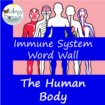 Human Body: Immune System Word Wall Vocabulary Cards