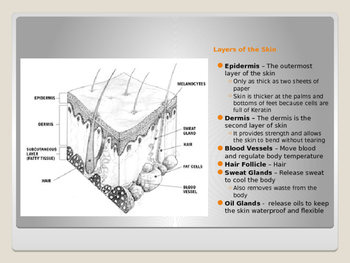 Human Body - Integumentary System