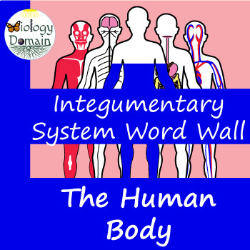 Human Body: Integumentary System Word Wall Vocabulary Cards