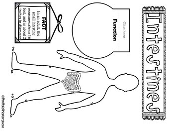 Human Body Systems Interactive Notebook