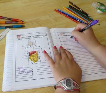 Human Body Interactive Notebooks, Warm Ups: Digestive System