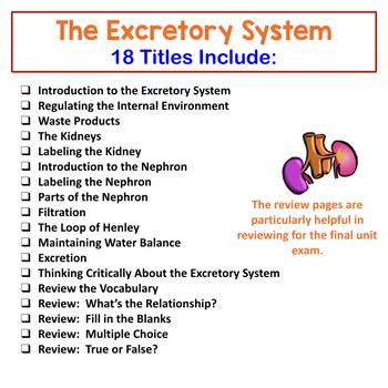 Human Body Interactive Notebooks, Warm Ups: Excretory System