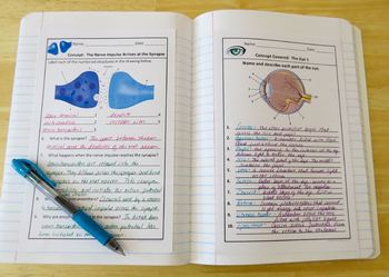 Human Body Interactive Notebooks, Warm Ups: Nervous System