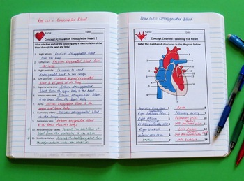 Human Body Bundle of Interactive Notebook Pages or Warm Ups