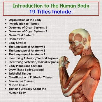 Human Body Introduction Interactive Notebooks, Warm Ups, Bell Ringers