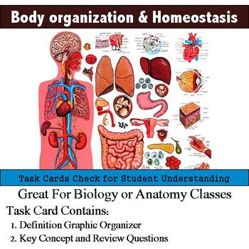 Human Body - Levels of Organization and Homeostasis Task Cards