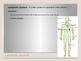 Human Body - Lymphatic System