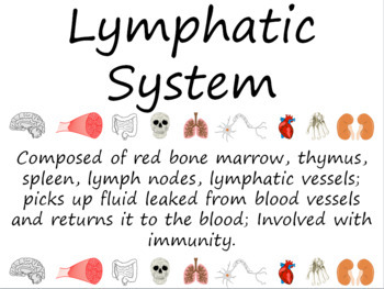 Human Body: Lymphatic System Word Wall Vocabulary Cards