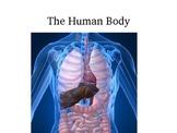 Human Body- Major Organ Functions Powerpoint
