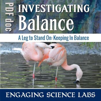 Human Body Muscles and Nerves: How We Keep Our Balance