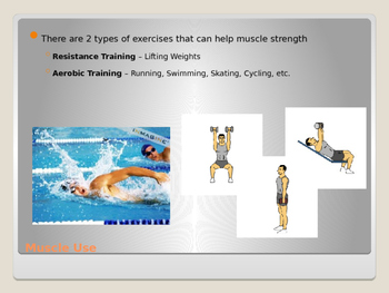 Human Body - Muscular Sysem