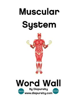 Human Body:  Muscular System Science Word Wall and Personal Word Walls
