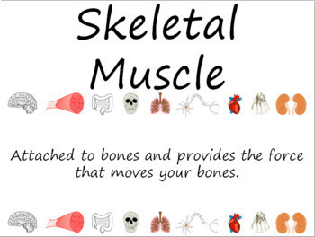 Human Body: Muscular System Word Wall Vocabulary Cards