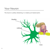 Human Body Nervous System For Kids: Brainiacs